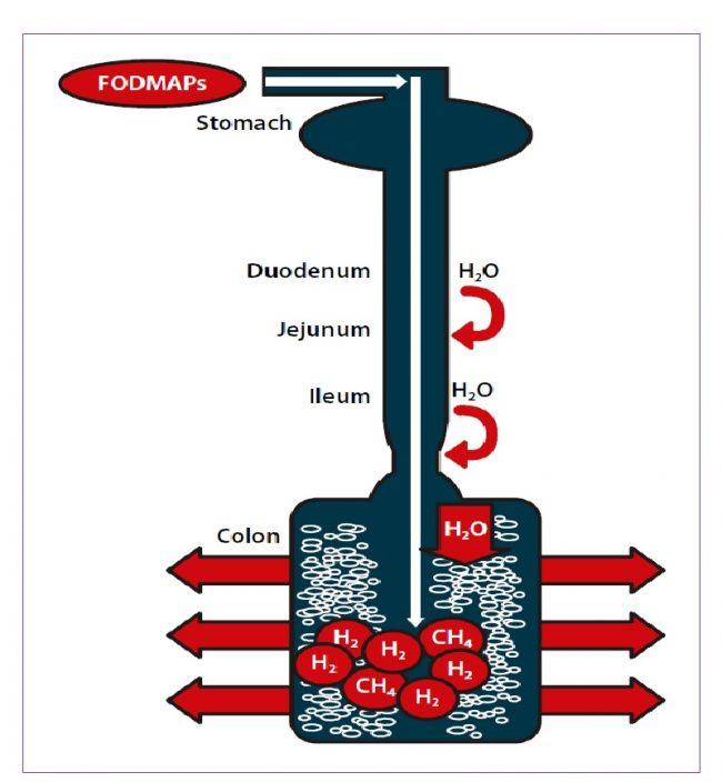 Δίαιτα Vegan Low FODMAPs - plantbased.gr